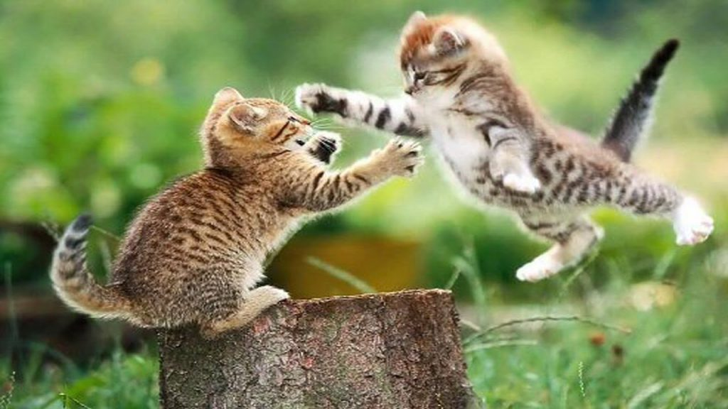 A Cat And A Dog Fighting