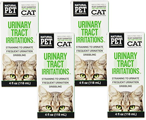 urinary tract infection in cats