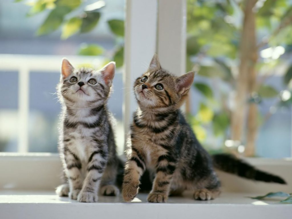 male cats versus female cats