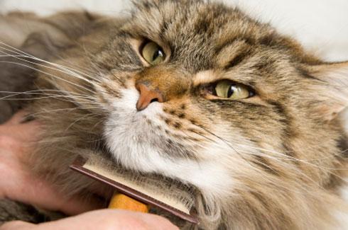 cat hair problems