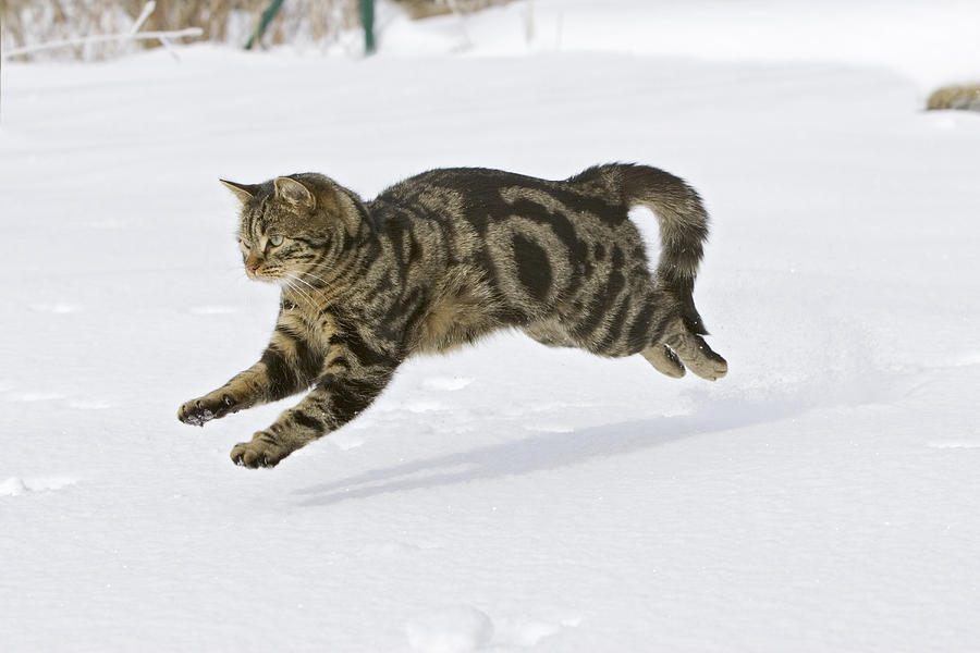 abilities cats have