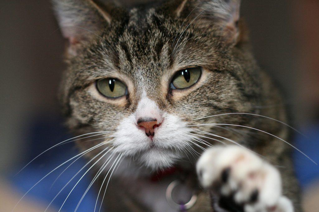 cat care guide
