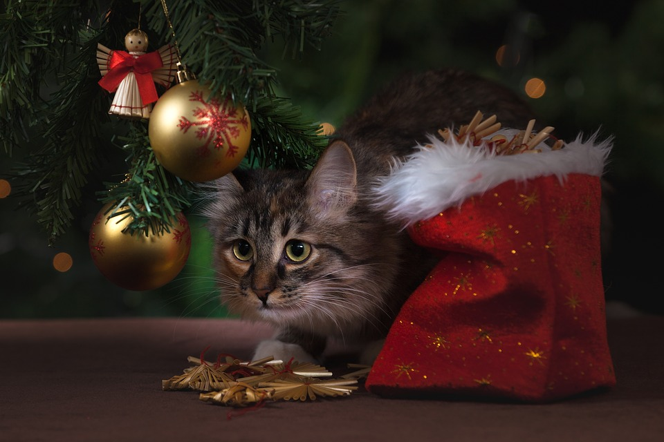 unusual cat gifts