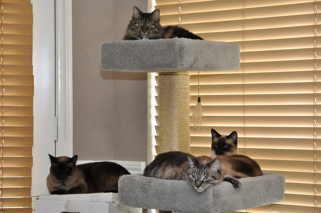 indoor cat furniture