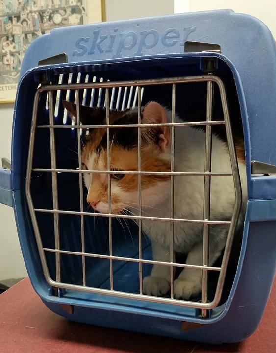adopting a stray cat