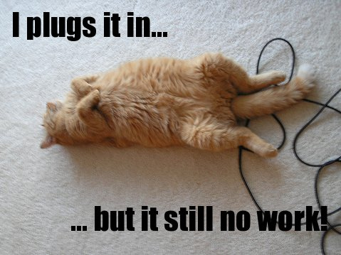 cat playing with wire – Fit Cats