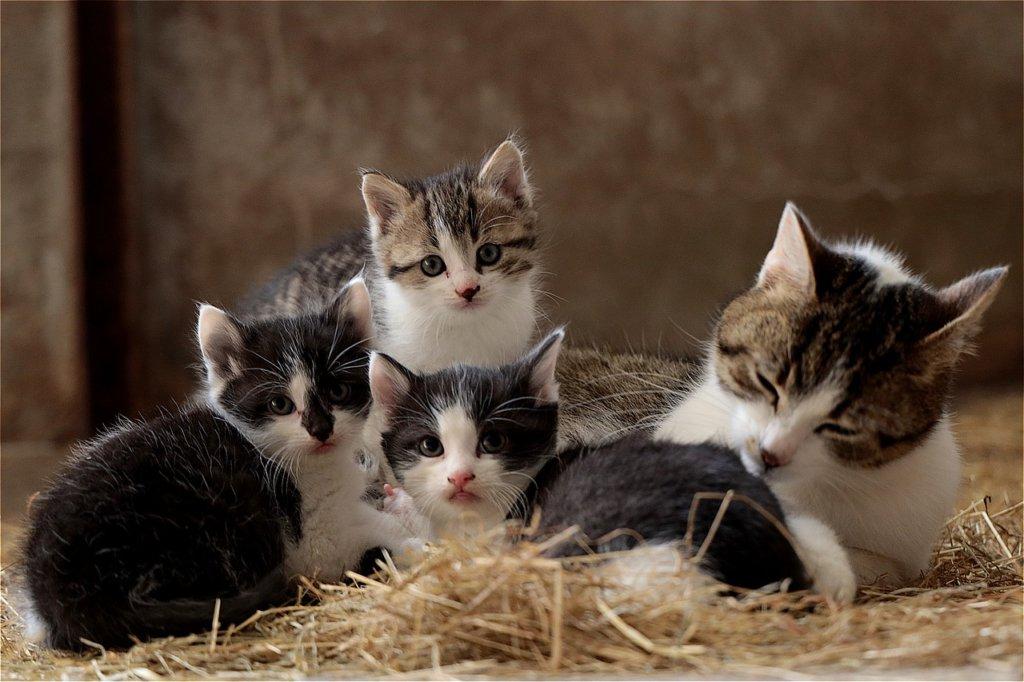 multi cat