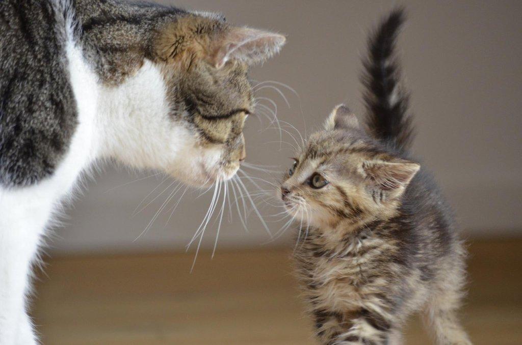 multi cat household tips
